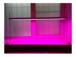 Фитосветильник Солнцедар Д-40 фито (красно-синий спектр)